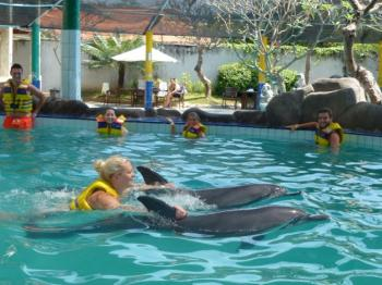Swim With Dolphin Bali Package