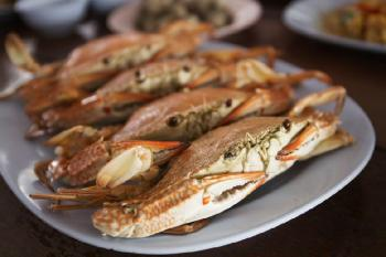 Ketchikan Rainforest Sanctuary & Crab Feast Package