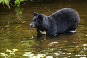 Sitka Bears, Raptor Center, and Totem Park Tour Package