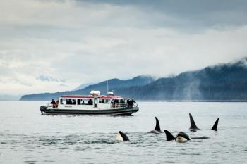 Sitka Marine Wildlife Exploration By Boat Package