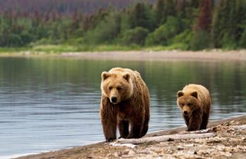 Anchorage 7-night Alaska Wildlife Safari Tour Package