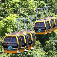 Ecological Forest Fun for all Tour