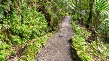 Private Guided La Mina Hike in El Yunque Rainforest