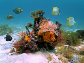 Hidden Bays Snorkel Eco Tour