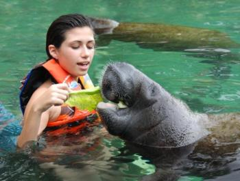 Dolphin, Manatee and Sea Lion Extravaganza At Isla Mujeres Tour