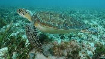 Morning Glory Snorkel in Puerto Morelos Tour