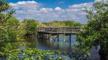 Private Little Havana Tour and Everglades Airboat Ride