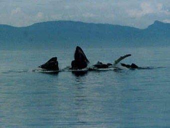Alaska Cruises from Juneau to Juneau Package