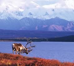 Majestic Tundra Explorer Cruisetour 4a Package