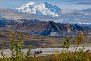 Whittier to Anchorage Bus Tour with Wildlife Park Package