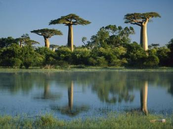 Baobabs and Lemurs Package