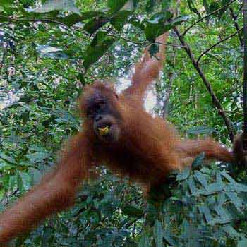 5 Days Sumatra Nature Trekking Package