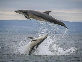 Dolphin Watching & Snorkelling For 3 Hrs Package