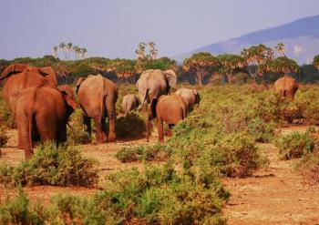 4 Days Kenya Road Safari Packages from Mombasa Package
