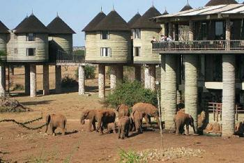 4 Days Kenya Road Safari Package from Mombasa to Taita Hills Salt Lick, Tsavo West and Amboseli Safa