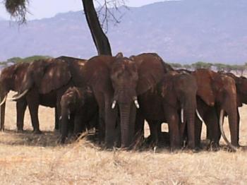2 Days Kenya Road Safari Package to Amboseli from Mombasa Package