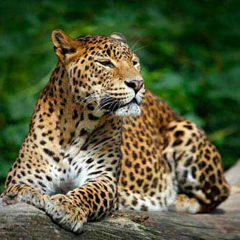 Sri Lanka Mingle with Nature Tour