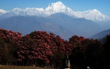 Ghorepani, Poon Hill Trekking Package