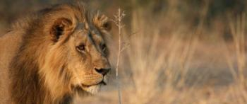 KRUGER BIG GAME 5 DAY CAMPING SAFARI PACKAGE