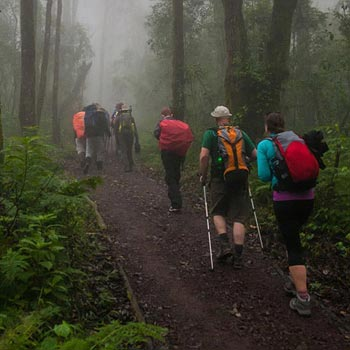 Experience Climbing Mt. Kilimanjaro Via Lemosho Route - 7 Days