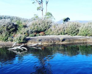 Tasmania Highlight 4 Days Tour