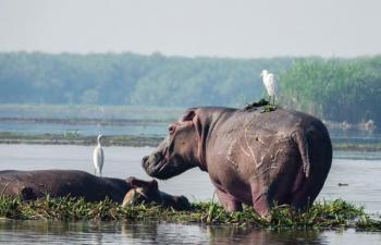 Safari in Uganda – Murchison Falls & Kidepo Valley Package