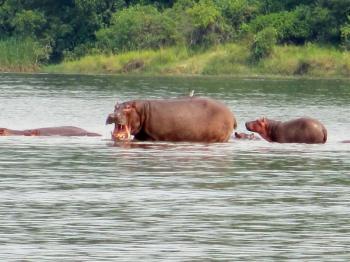 Murchison Falls National Park Safari Tour in Uganda