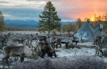 Tour to Tsaatan Reindeer Herder Family