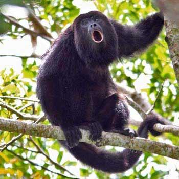 Altun Ha and Belize Monkey Sanctuary
