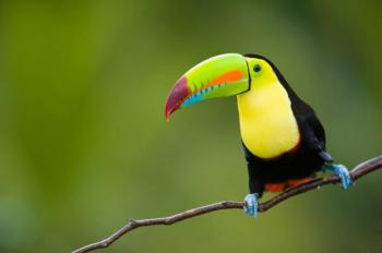 Bird Watching Tours in Belize