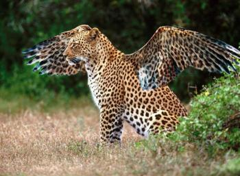 Belize Zoo Tours