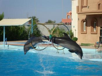 Dahab Tours to Dolphin Show