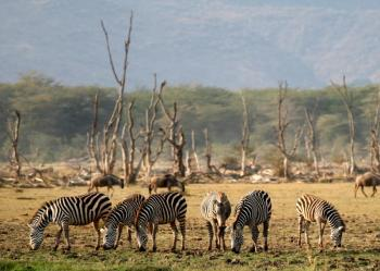7 Days Safari Camping or Lodge Tour