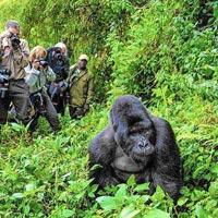 One Day Gorilla Trek