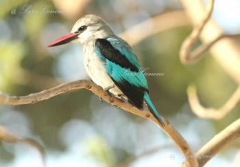Ethiopian Birding Tour 4 Days