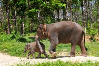 One Day Trekking with Elephant Package