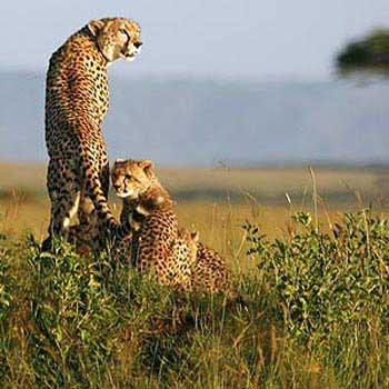 7 Days a Taste of Kenya Safari Tour