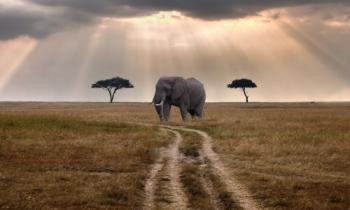 5 Days Amazing Wildlife Safari Tour