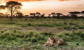 8 Days Best of Kenya Safari Adventure