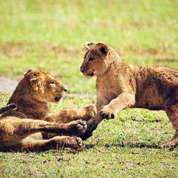 L. Manyara - Ngorongoro - Tarangire Tour