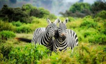 Arusha N.p. - Ngorongoro - Serengeti Tour