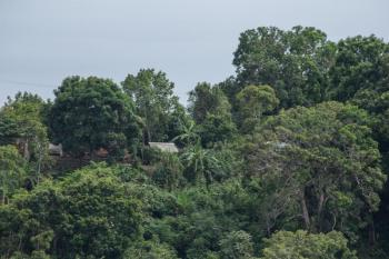 2 Day Jungle Tour in Leticia Amazonas Package