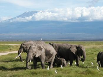 Tsavo-west & Amboseli Tour