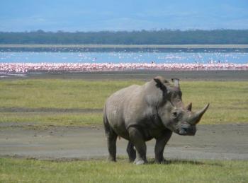 Discover Tanzania Tour