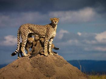 Majestic Mara Tour