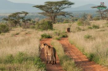 Lewa - Shaba – Mount Kenya – Masai Mara Tour