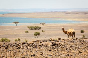 Turkana Via Chalbi Desert Tour