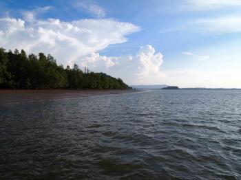 3d Mangroves & Irrawaddy Dolphin Tour