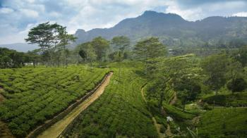 5D4N Sri Lankan Highlands Package