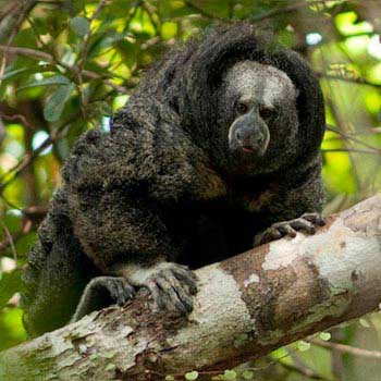 Iquitos Forest Adventure 7D/6N Tour